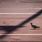 A bird lands on the court mid-match